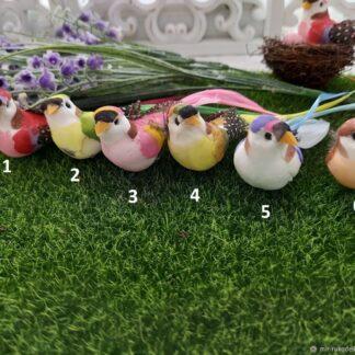 птицы-0632