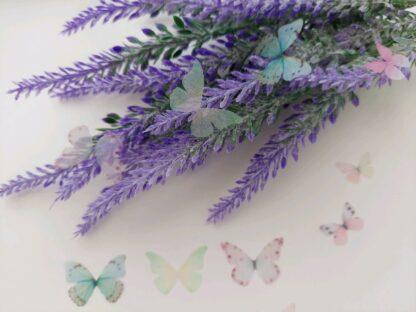 бабочки-0617
